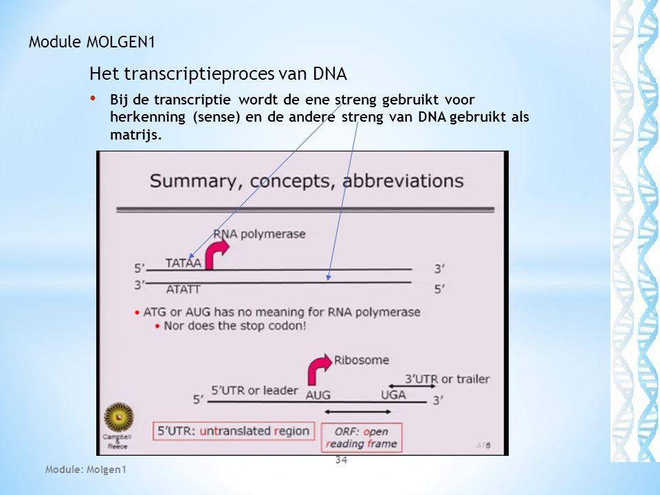 Het transcriptieproces van DNA Bij de transcriptie wordt de ene streng gebruikt voor herkenning (sense) en de andere streng van DNA gebruikt als matrijs.