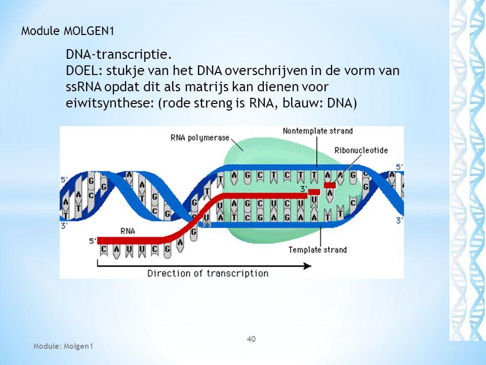 DNA-transcriptie. DOEL: stukje van het DNA overschrijven in de vorm van ssRNA opdat dit als matrijs kan dienen voor eiwitsynthese: (rode streng is RNA