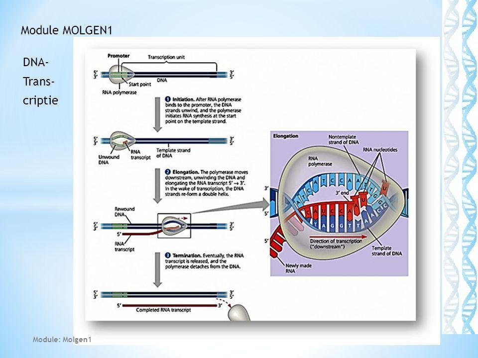 DNA- Trans- criptie 41 Module MOLGEN1 Module: Molgen1