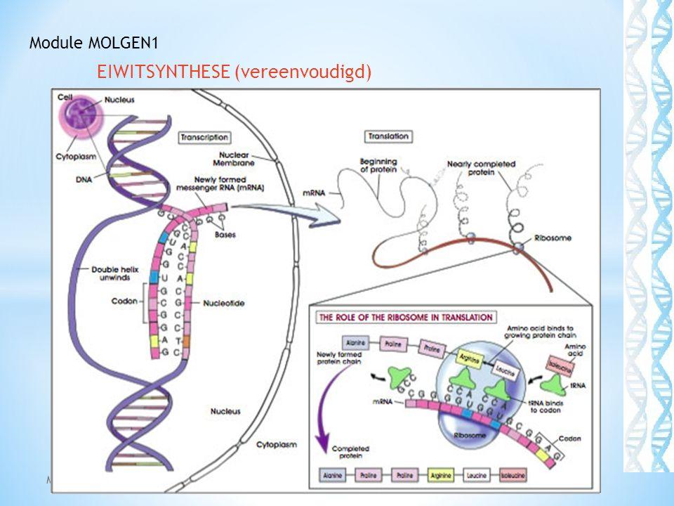 EIWITSYNTHESE (vereenvoudigd) Module: Molgen1 43 Module MOLGEN1