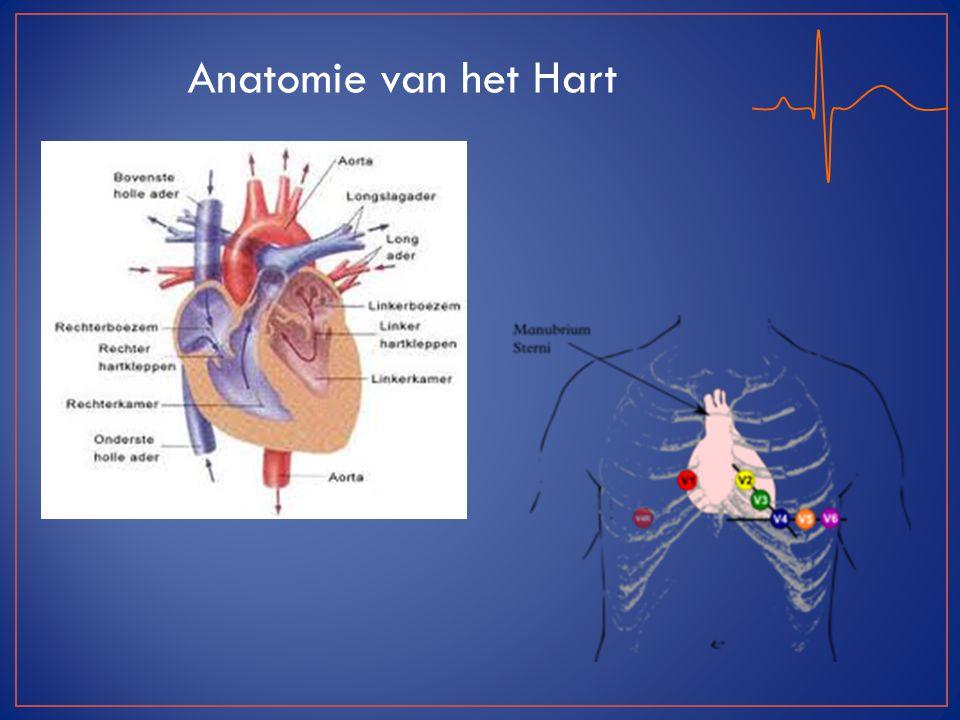Anatomie van het Hart