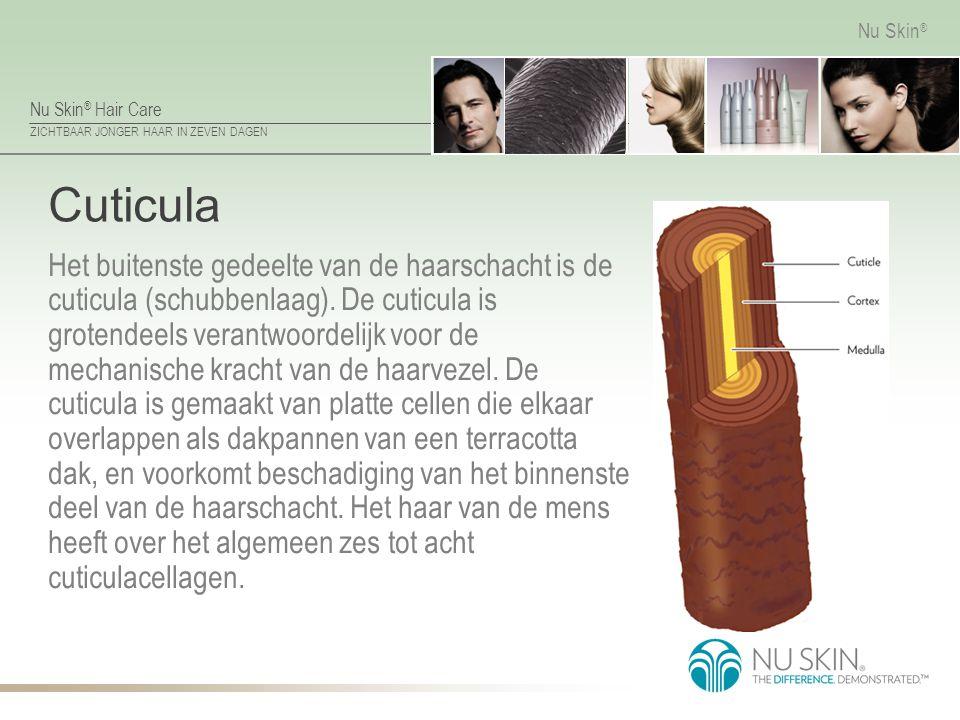 Nu Skin ® Hair Care ZICHTBAAR JONGER HAAR IN ZEVEN DAGEN Nu Skin ® Cuticula Het buitenste gedeelte van de haarschacht is de cuticula (schubbenlaag). D