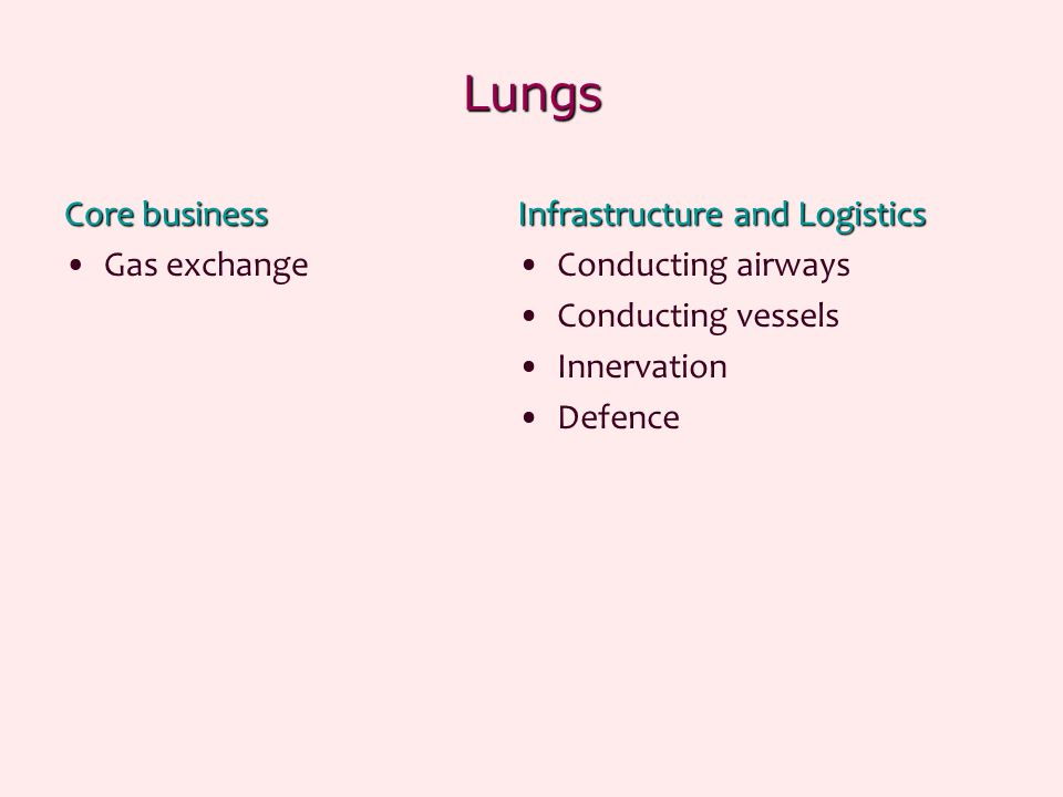 Lungs Core business Gas exchange Infrastructure and Logistics Conducting airways Conducting vessels Innervation Defence