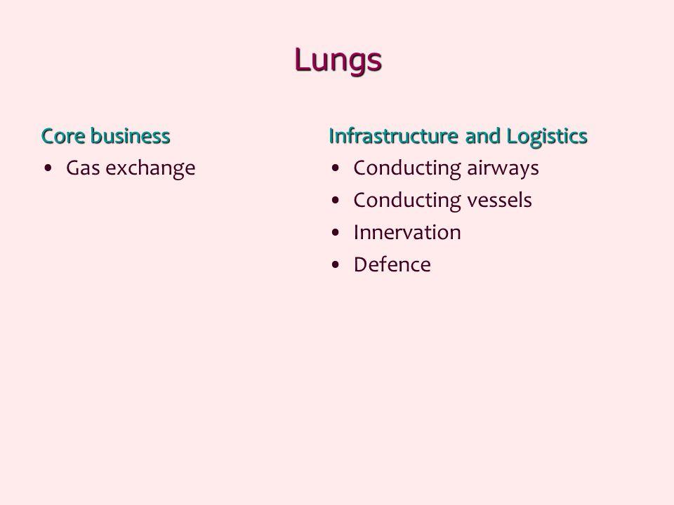 Alveolar duct – terminal bronchiole