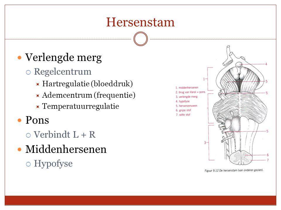 Hersenstam Verlengde merg  Regelcentrum  Hartregulatie (bloeddruk)  Ademcentrum (frequentie)  Temperatuurregulatie Pons  Verbindt L + R Middenher
