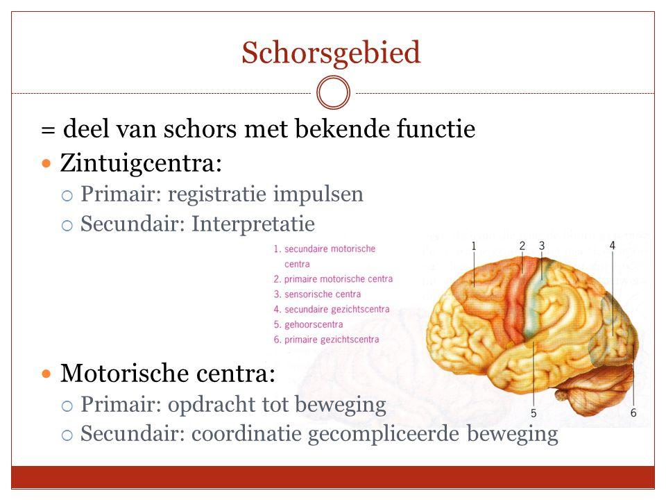 Schorsgebied = deel van schors met bekende functie Zintuigcentra:  Primair: registratie impulsen  Secundair: Interpretatie Motorische centra:  Prim