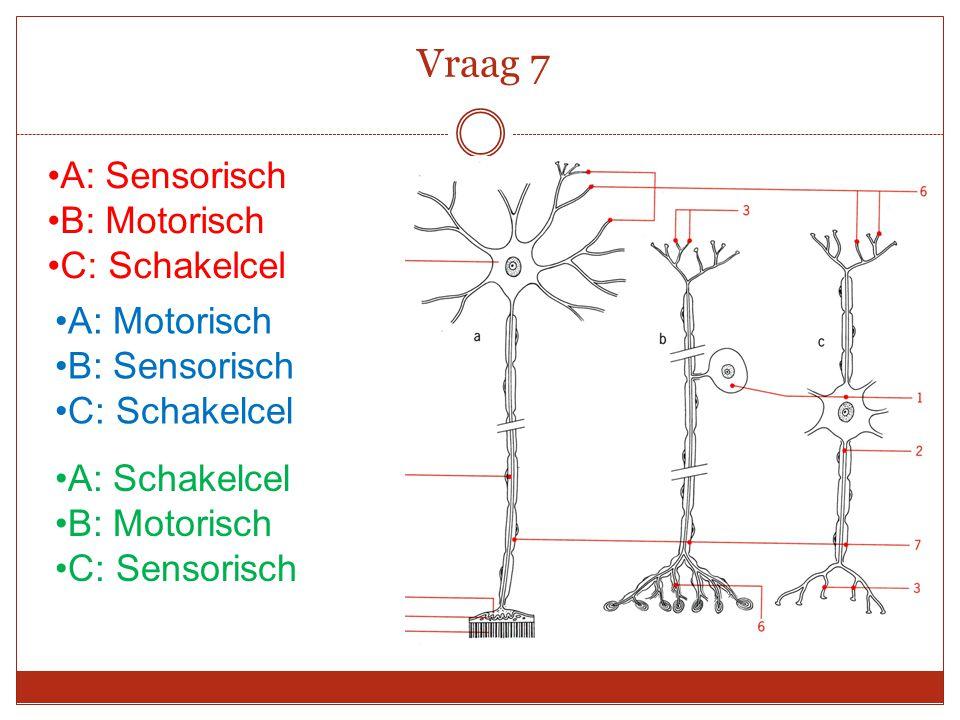 A: Sensorisch B: Motorisch C: Schakelcel Vraag 7 A: Schakelcel B: Motorisch C: Sensorisch A: Motorisch B: Sensorisch C: Schakelcel