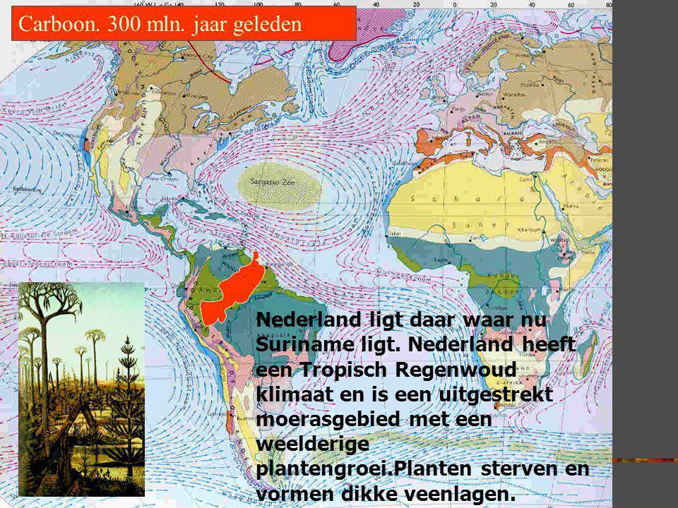 Carboon. 300 mln. jaar geleden Nederland ligt daar waar nu Suriname ligt. Nederland heeft een Tropisch Regenwoud klimaat en is een uitgestrekt moerasg