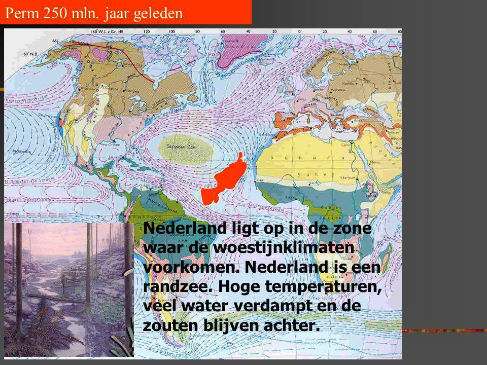 Perm 250 mln. jaar geleden Nederland ligt op in de zone waar de woestijnklimaten voorkomen. Nederland is een randzee. Hoge temperaturen, veel water ve