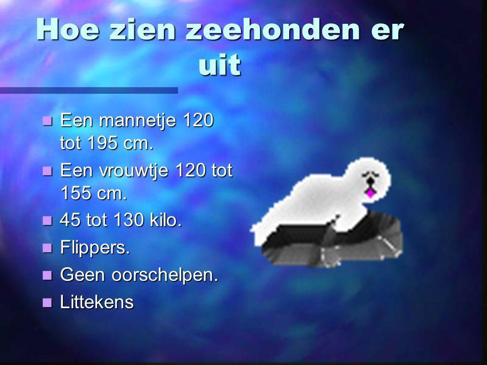 Hoe zien zeehonden er uit Een mannetje 120 tot 195 cm.