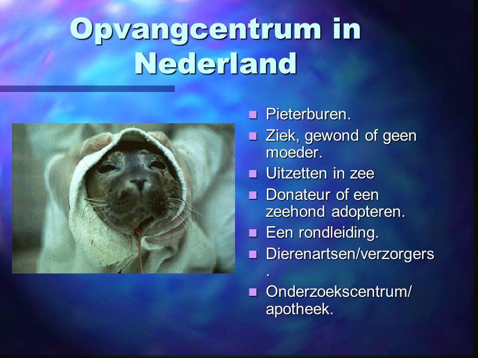 Opvangcentrum in Nederland Pieterburen.Ziek, gewond of geen moeder.