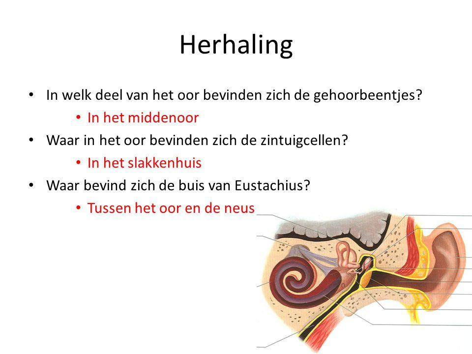 Herhaling In welk deel van het oor bevinden zich de gehoorbeentjes? In het middenoor Waar in het oor bevinden zich de zintuigcellen? In het slakkenhui