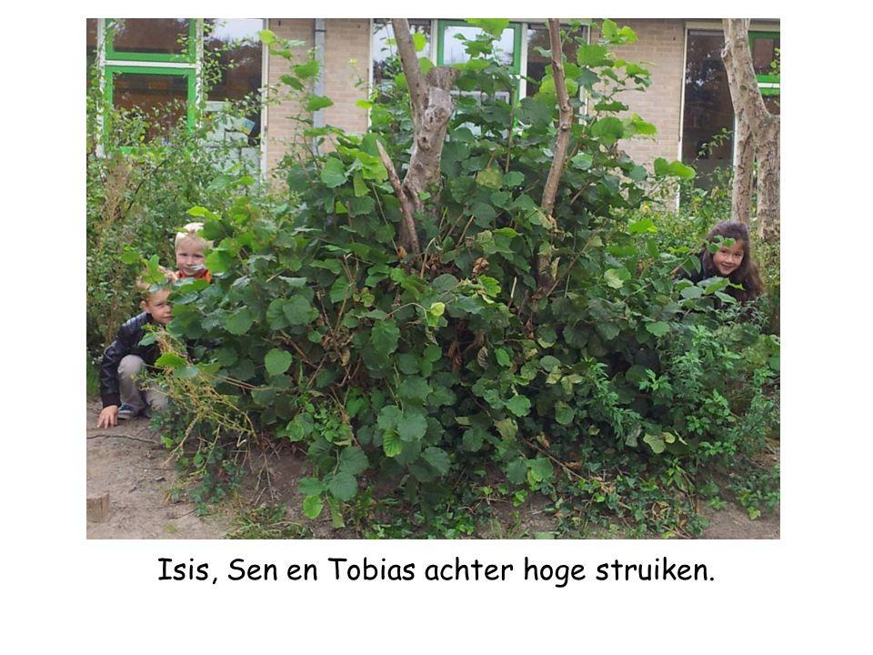 Isis, Sen en Tobias achter hoge struiken.