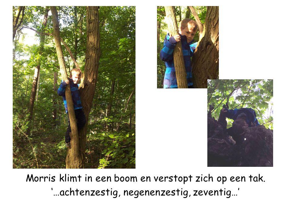 Morris klimt in een boom en verstopt zich op een tak. '…achtenzestig, negenenzestig, zeventig…'