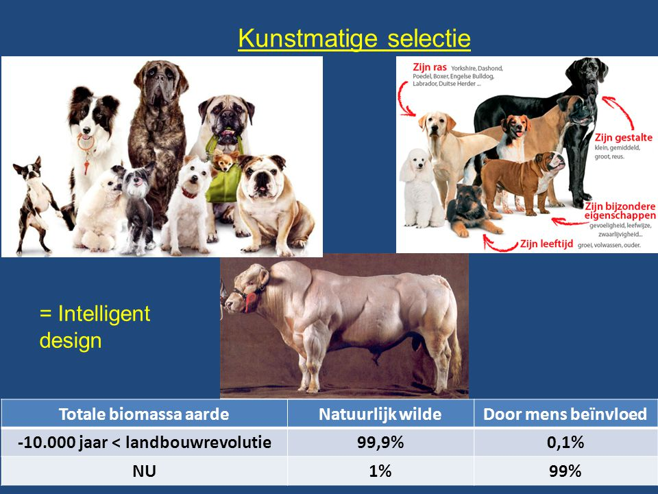 Kunstmatige selectie = Intelligent design Totale biomassa aardeNatuurlijk wildeDoor mens beïnvloed -10.000 jaar < landbouwrevolutie99,9%0,1% NU1%99%