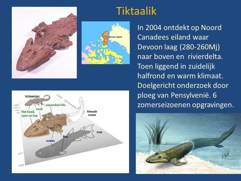Tiktaalik In 2004 ontdekt op Noord Canadees eiland waar Devoon laag (280-260Mj) naar boven en rivierdelta. Toen liggend in zuidelijk halfrond en warm
