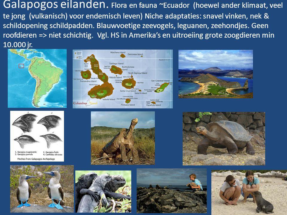 Galapogos eilanden. Flora en fauna ~Ecuador (hoewel ander klimaat, veel te jong (vulkanisch) voor endemisch leven) Niche adaptaties: snavel vinken, ne
