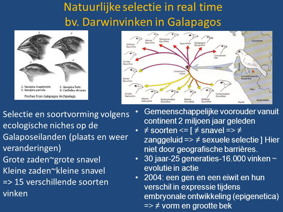 Natuurlijke selectie in real time bv. Darwinvinken in Galapagos Selectie en soortvorming volgens ecologische niches op de Galaposeilanden (plaats en w