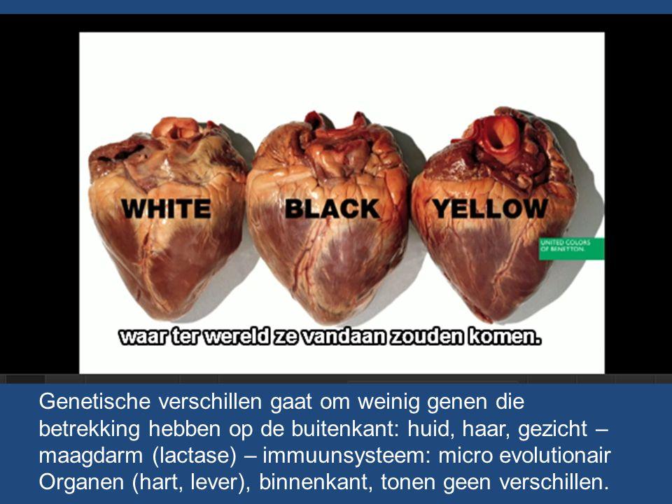 Genetische verschillen gaat om weinig genen die betrekking hebben op de buitenkant: huid, haar, gezicht – maagdarm (lactase) – immuunsysteem: micro ev