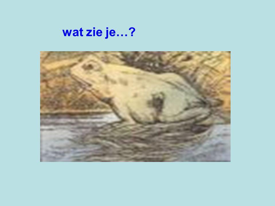 wat zie je…?
