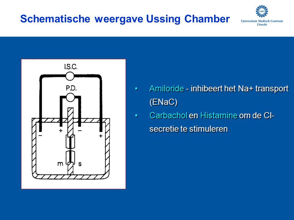 Schematische weergave Ussing Chamber Amiloride - inhibeert het Na+ transport (ENaC)Amiloride - inhibeert het Na+ transport (ENaC) Carbachol en Histami