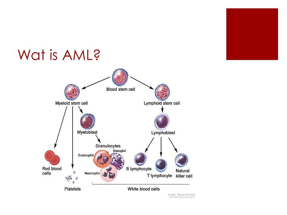 Wat is AML?