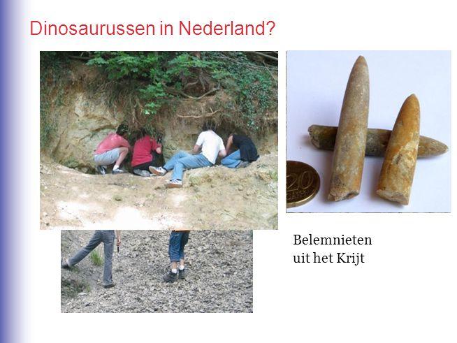 Dinosaurussen in Nederland? Op deze plaatsen is het goed mogelijk om naar fossielen te zoeken… Afdrukken van kokerwormpjes uit het Krijt Belemnieten u