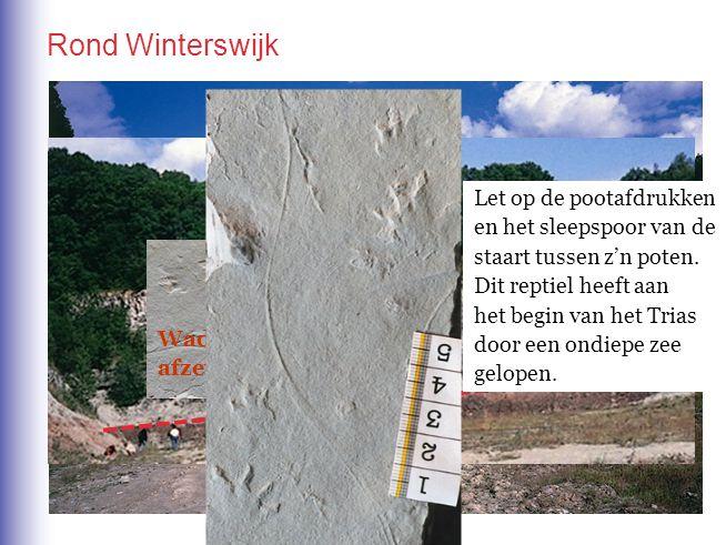 In de omgeving van Winterswijk in de Achterhoek. Rond Winterswijk Woestijn- afzettingen Wad- afzettingen Let op de pootafdrukken en het sleepspoor van