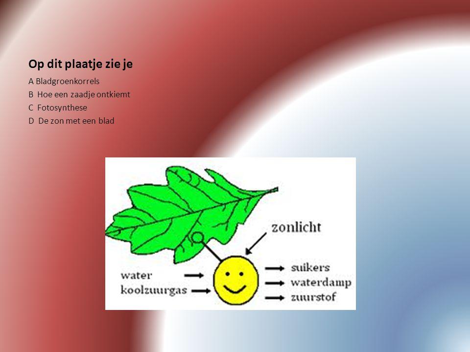 Op dit plaatje zie je A Bladgroenkorrels B Hoe een zaadje ontkiemt C Fotosynthese D De zon met een blad