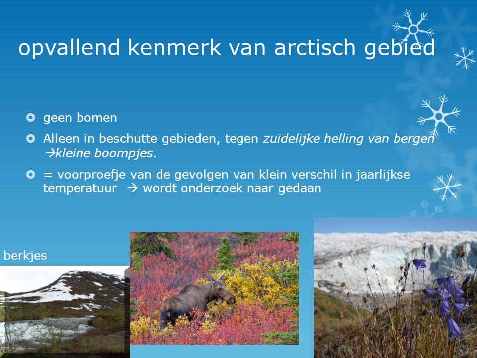 opvallend kenmerk van arctisch gebied  geen bomen  Alleen in beschutte gebieden, tegen zuidelijke helling van bergen  kleine boompjes.  = voorproe