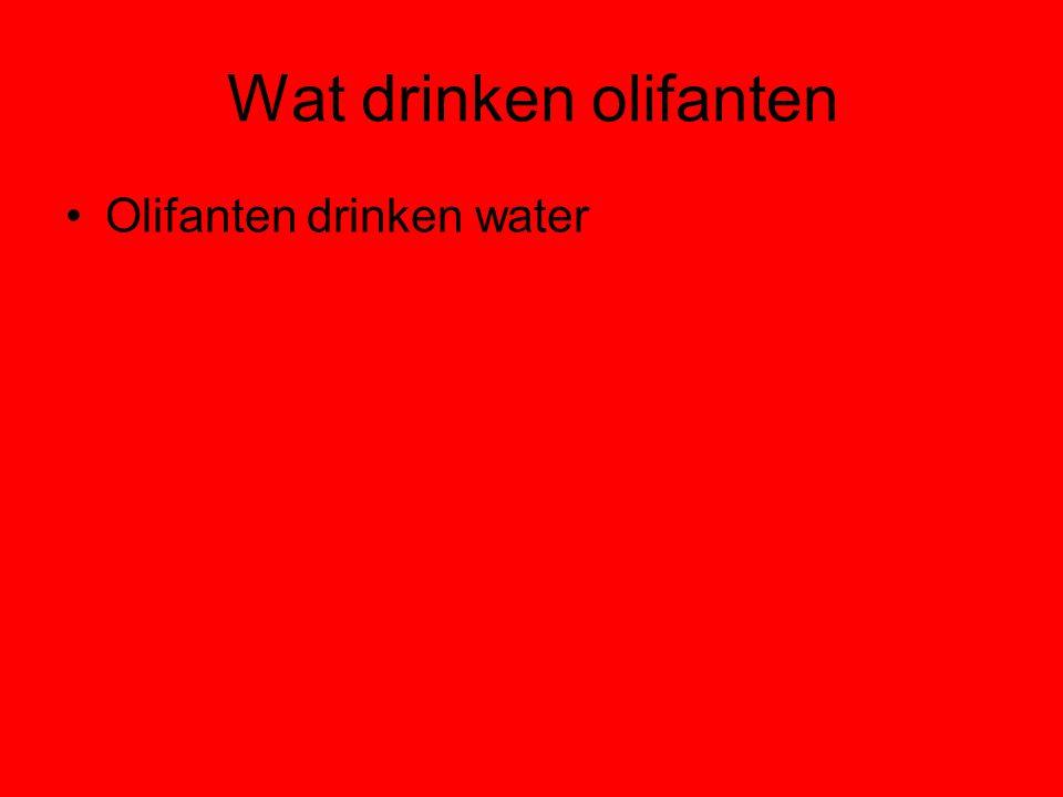 Wat drinken olifanten Olifanten drinken water