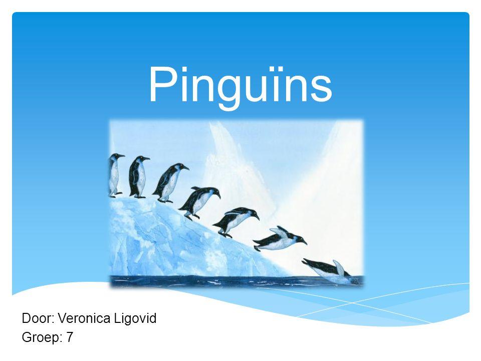 Pinguïns Door: Veronica Ligovid Groep: 7