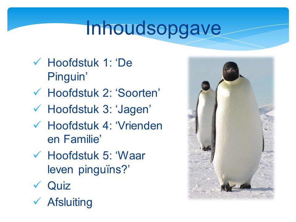 Hoofdstuk 1: 'De Pinguin' Hoofdstuk 2: 'Soorten' Hoofdstuk 3: 'Jagen' Hoofdstuk 4: 'Vrienden en Familie' Hoofdstuk 5: 'Waar leven pinguïns?' Quiz Afsl