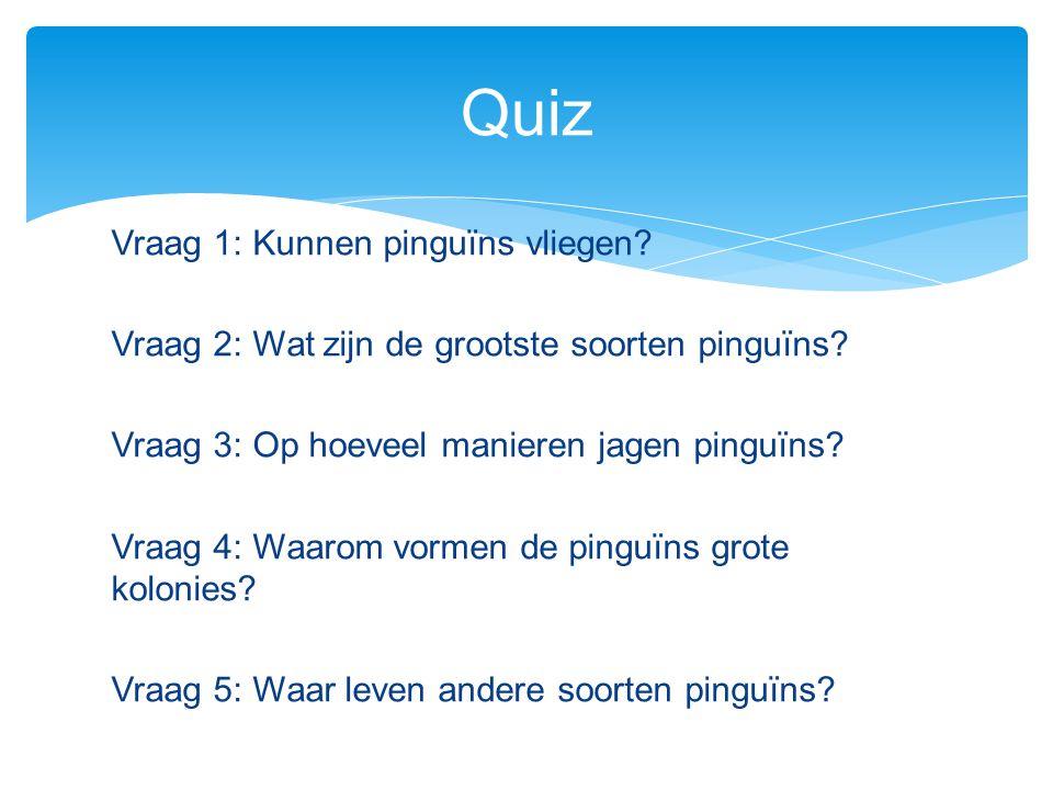 Vraag 1: Kunnen pinguïns vliegen? Vraag 2: Wat zijn de grootste soorten pinguïns? Vraag 3: Op hoeveel manieren jagen pinguïns? Vraag 4: Waarom vormen