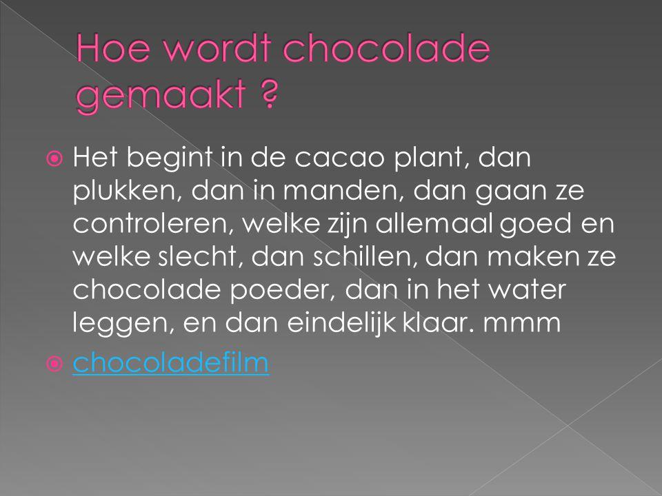  Het begint in de cacao plant, dan plukken, dan in manden, dan gaan ze controleren, welke zijn allemaal goed en welke slecht, dan schillen, dan maken ze chocolade poeder, dan in het water leggen, en dan eindelijk klaar.