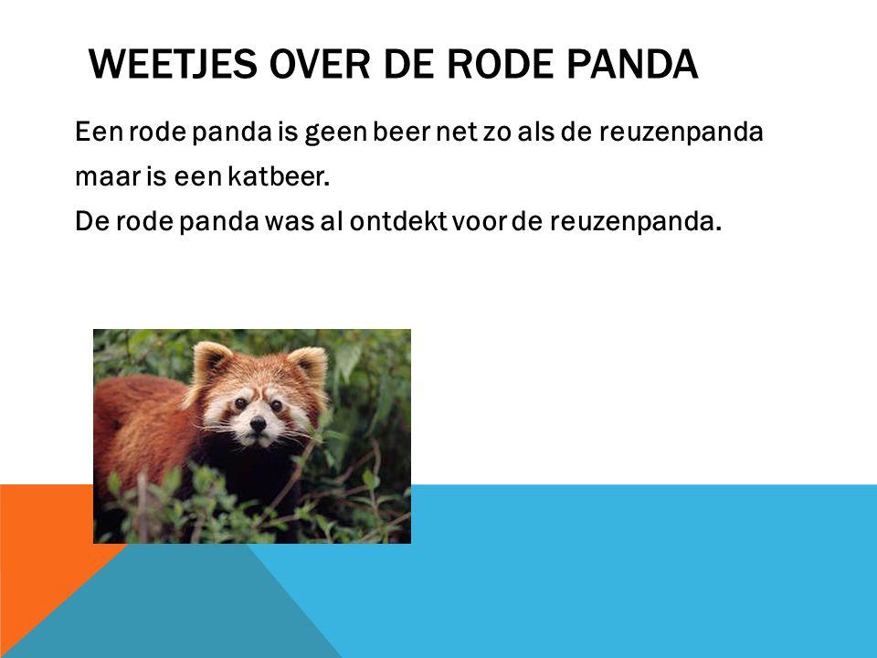 WAT ETEN RODE PANDA`S Ze eten net zoals de Reuzenpanda bamboe. Maar ook andere dingen net zo als: Fruit, zaden en kleine dieren