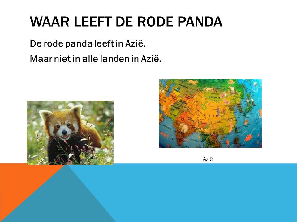 WEETJES OVER DE RODE PANDA Een rode panda is geen beer net zo als de reuzenpanda maar is een katbeer.