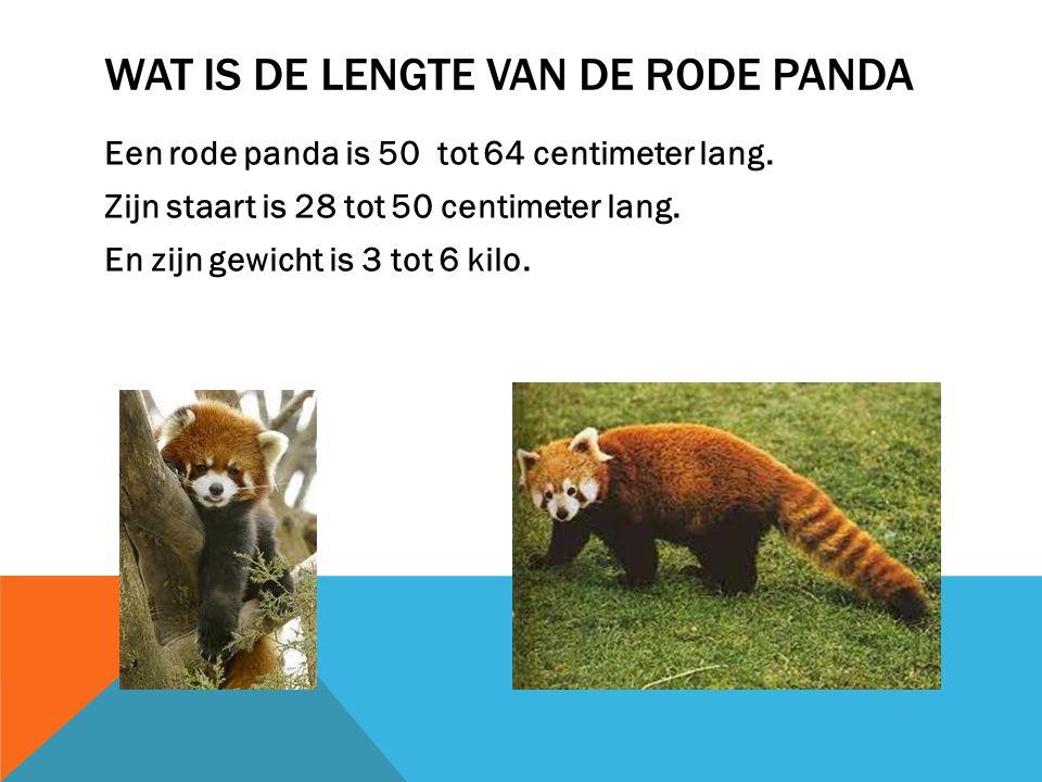 WAAR LEEFT DE RODE PANDA De rode panda leeft in Azië. Maar niet in alle landen in Azië. Azië
