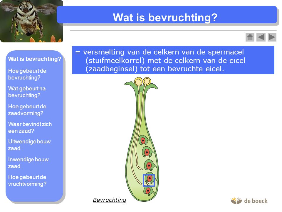 Wat is bevruchting.