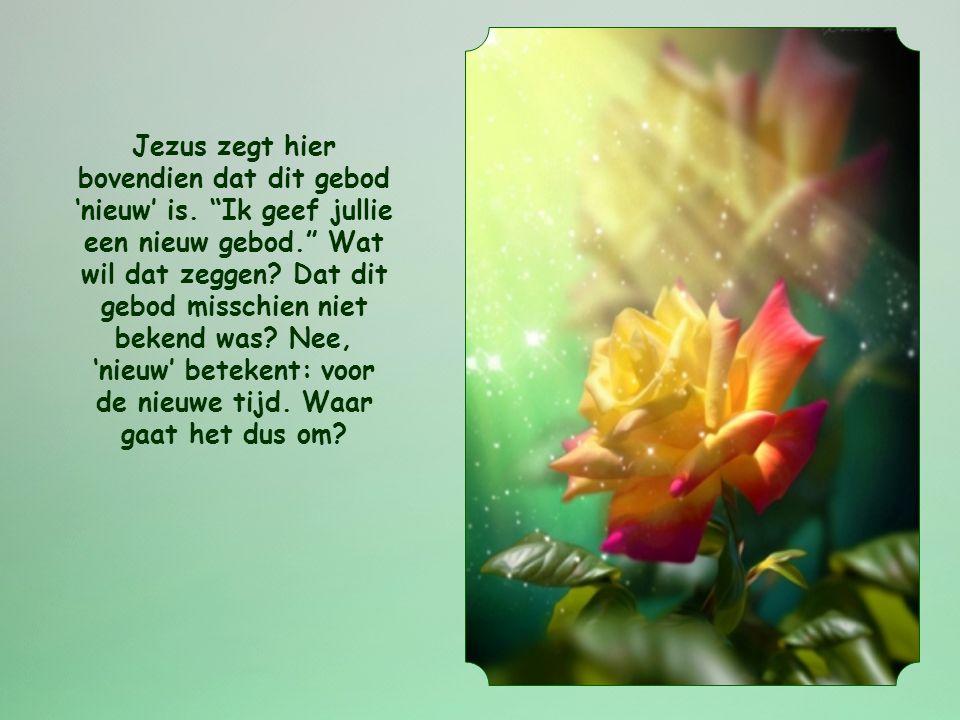 """""""Ik geef jullie een nieuw gebod: heb elkaar lief. Zoals ik jullie heb liefgehad, zo moeten jullie elkaar liefhebben."""" Johannes 13,34"""
