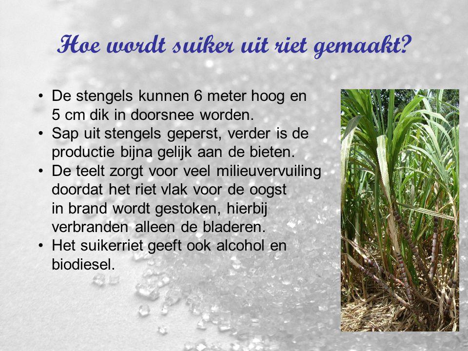 3. Hoe wordt suiker uit biet gemaakt? Bladeren maken suiker door zonlicht. Oogst, vervoer en verwerking heet de bietencampagne. Suikerfabrieken sluite