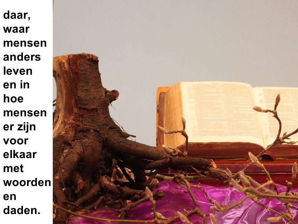 Het paars als teken van inkeer en verwachting.De Bijbel met het Woord.