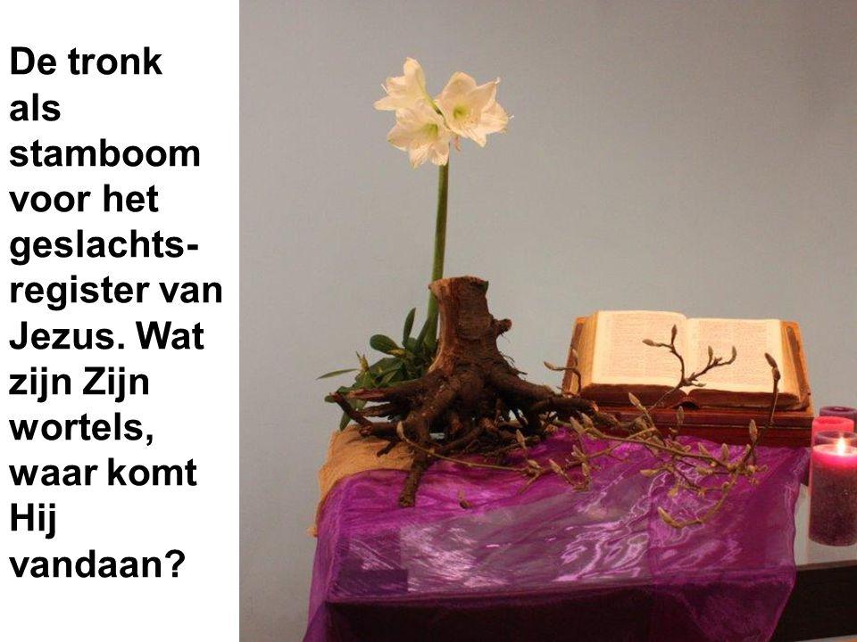 De tronk als stamboom voor het geslachts- register van Jezus. Wat zijn Zijn wortels, waar komt Hij vandaan?