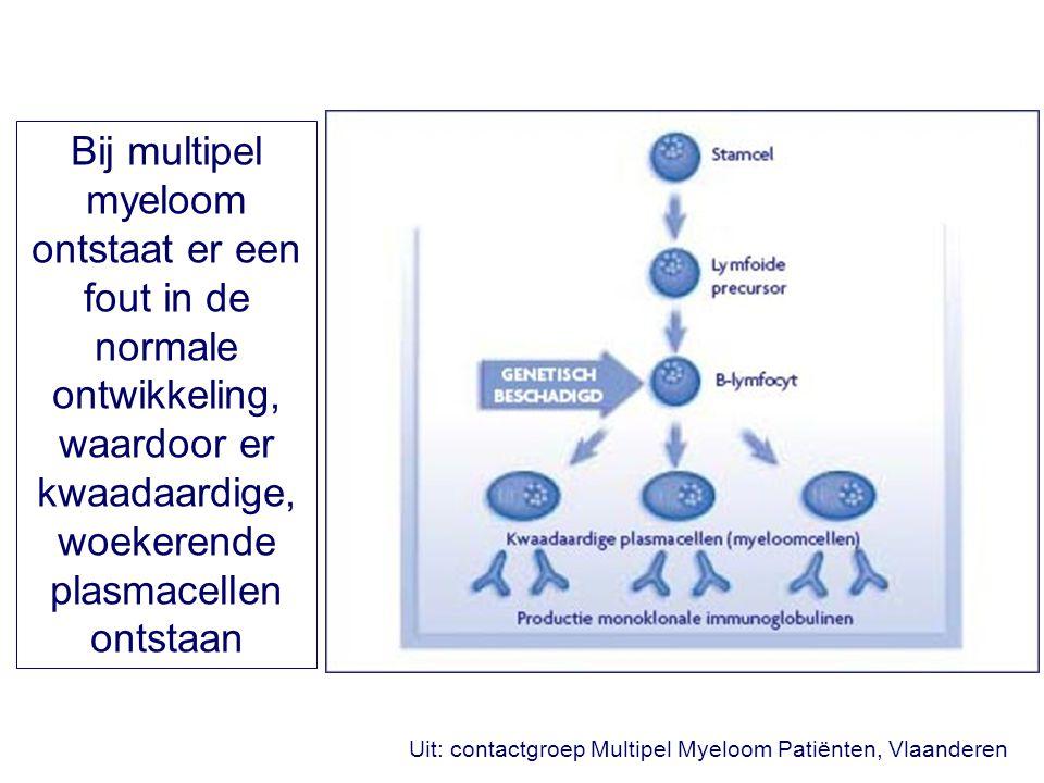 Uit: contactgroep Multipel Myeloom Patiënten, Vlaanderen Bij multipel myeloom ontstaat er een fout in de normale ontwikkeling, waardoor er kwaadaardige, woekerende plasmacellen ontstaan