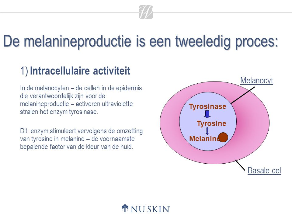 1) Intracellulaire activiteit In de melanocyten – de cellen in de epidermis die verantwoordelijk zijn voor de melanineproductie – activeren ultraviolette stralen het enzym tyrosinase.