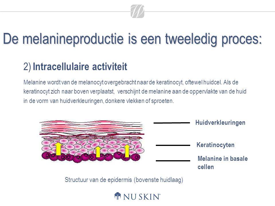 De melanineproductie is een tweeledig proces: 2) Intracellulaire activiteit Melanine wordt van de melanocyt overgebracht naar de keratinocyt, oftewel