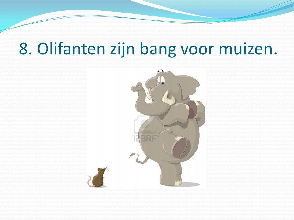 8. Olifanten zijn bang voor muizen.