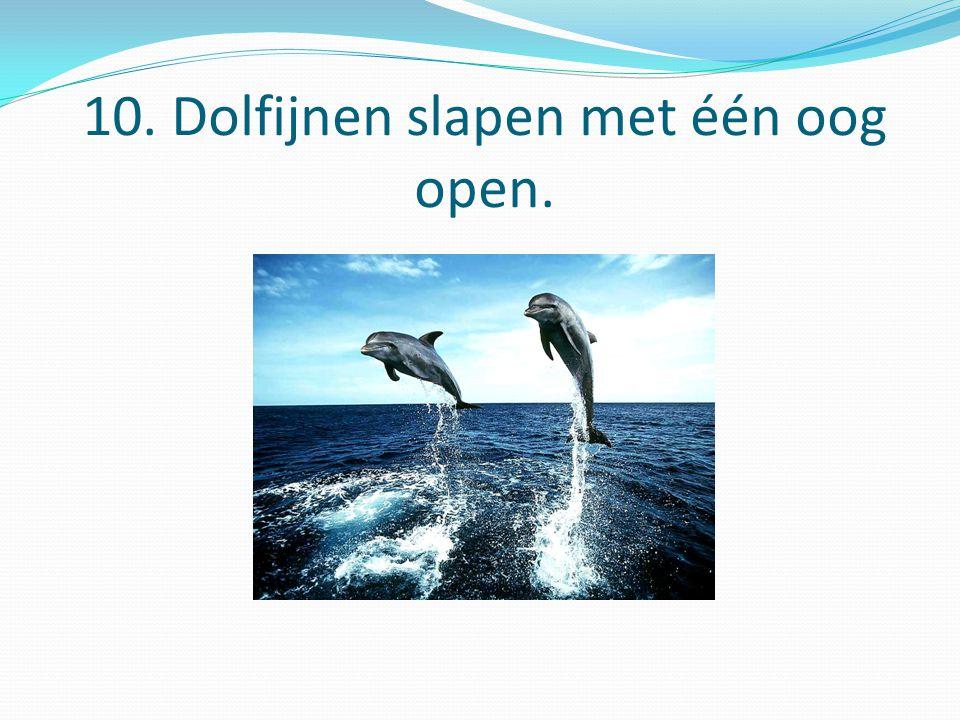 10. Dolfijnen slapen met één oog open.