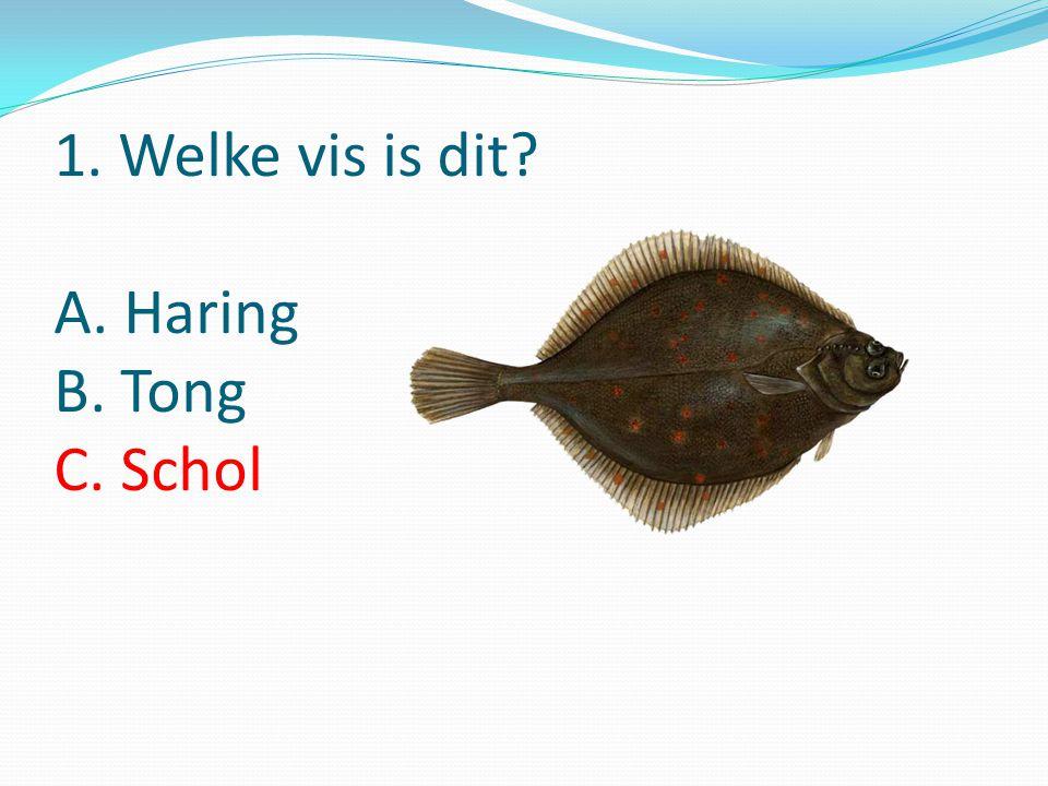 1. Welke vis is dit A. Haring B. Tong C. Schol