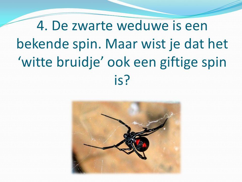 4.De zwarte weduwe is een bekende spin.